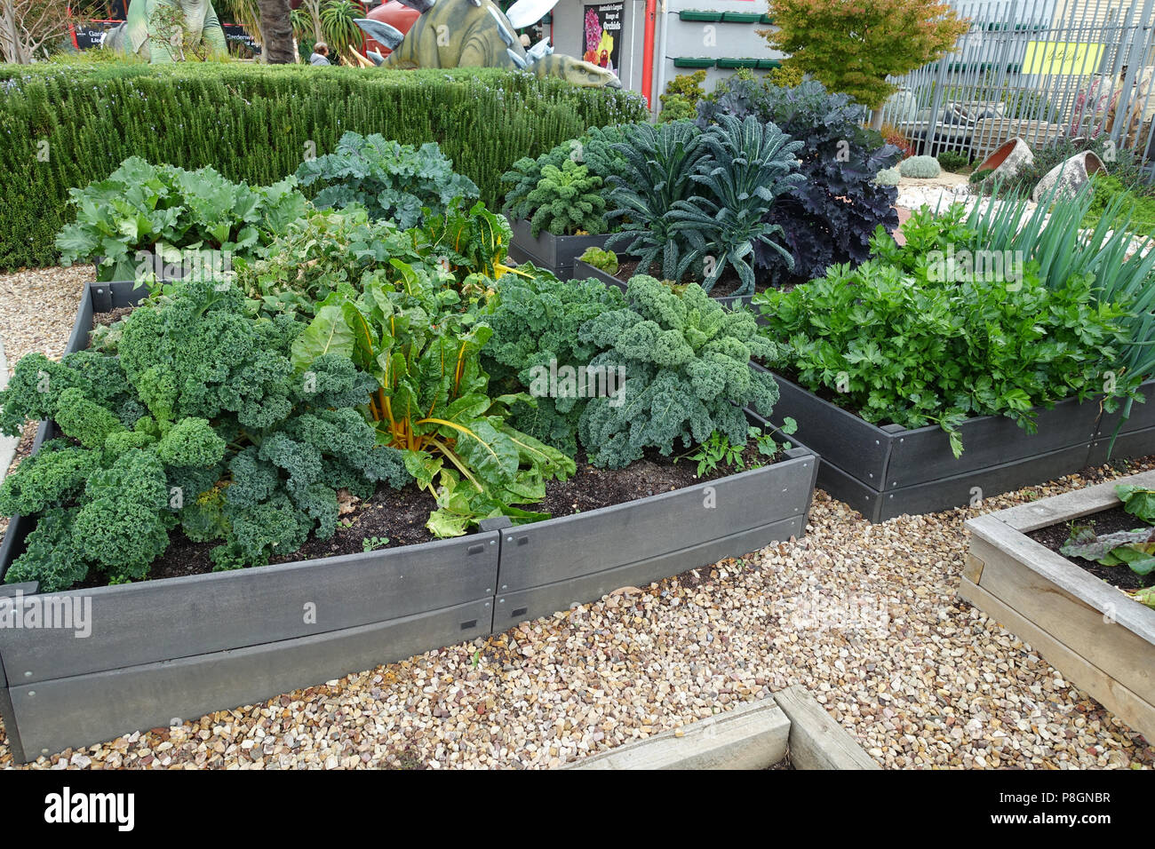 Vegetable patch with mixed vegetables growing ready to harvest Stock Photo
