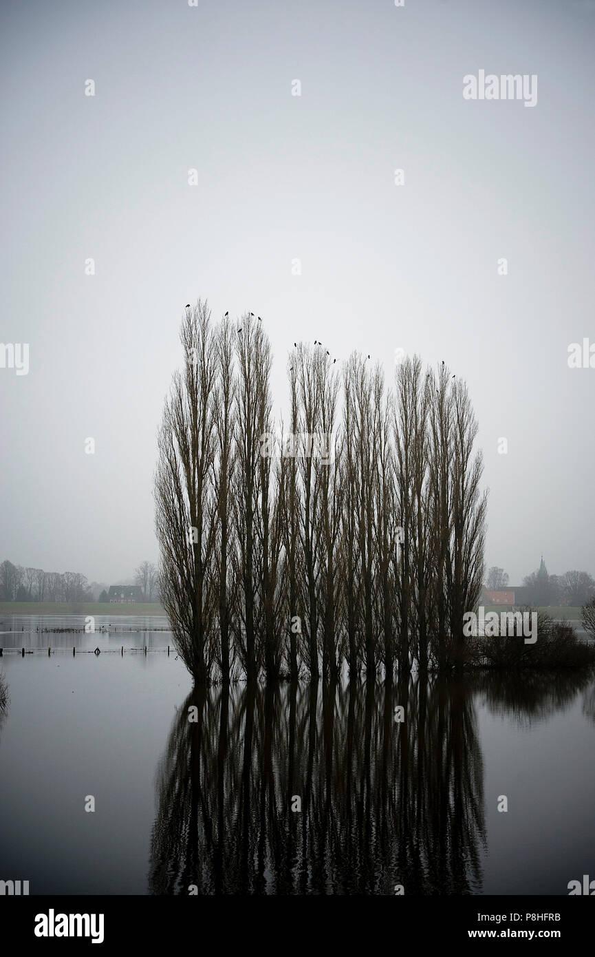 Flut. Hochwasser. Elbe bei Geesthacht. - Stock Image