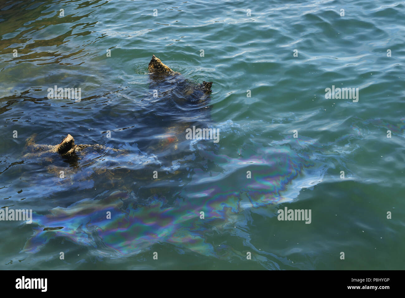 USS Arizona Memorial. Oil on the water comes from the sunken ship. World War II Valor in the Pacific National Monument, Pearl Harbor, Honolulu, Oahu I - Stock Image