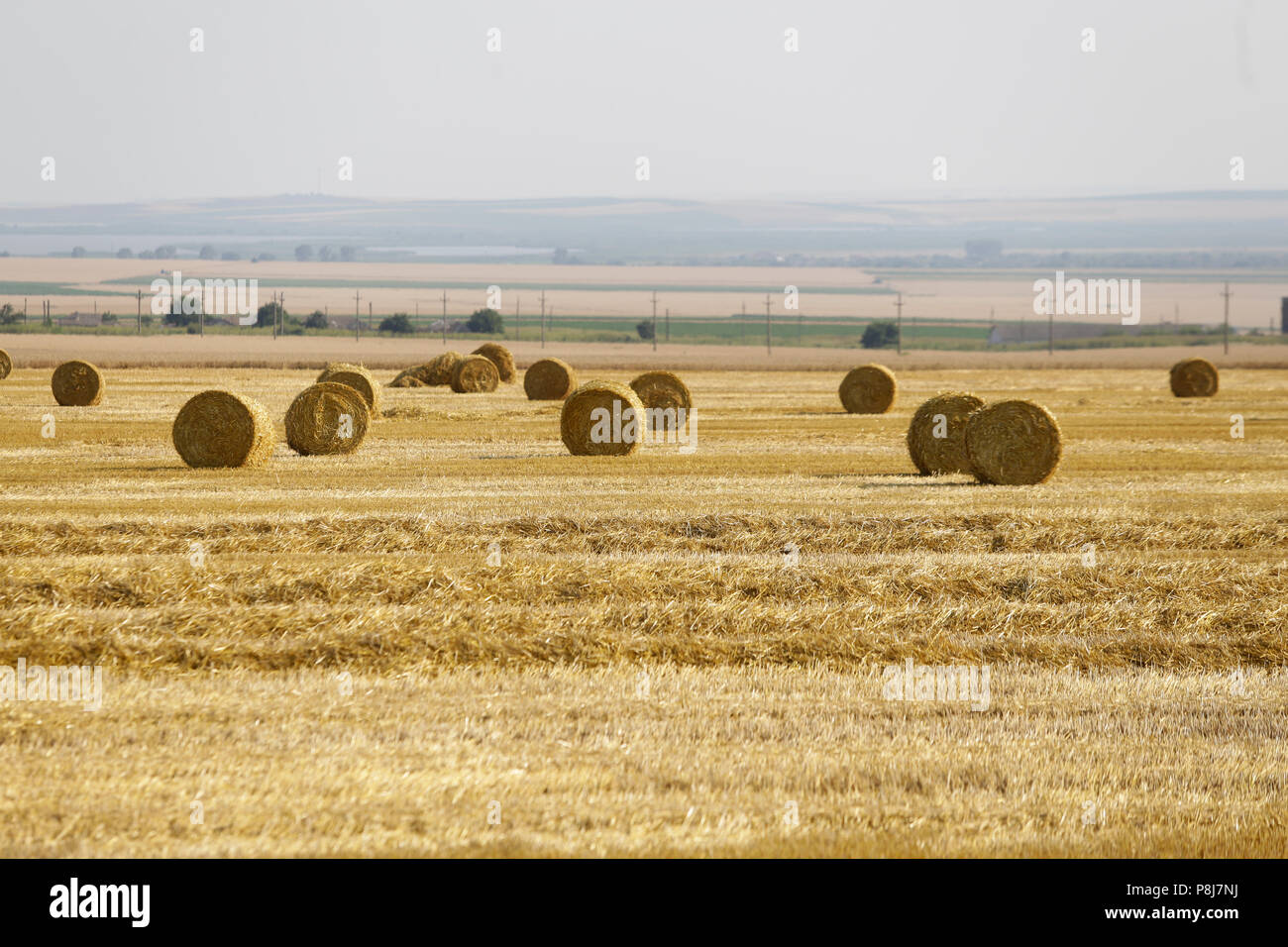 Wheat ballots on a farmer's field in southern Romania - Stock Image
