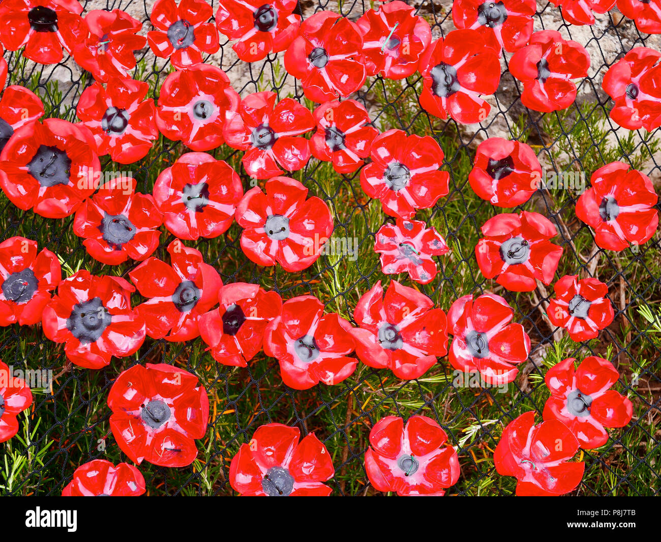 Plastic poppy stock photos plastic poppy stock images alamy remembrance poppies made from recycled plastic drinks bottles attached to a net on a grass background mightylinksfo
