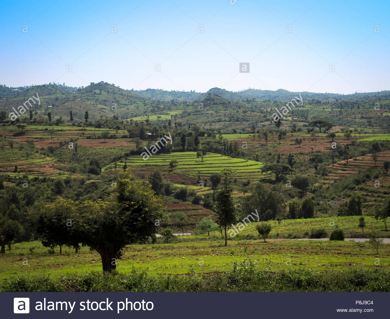 Hilly landscape with terraced fields, South Ethiopia, Ethiopia - Stock Image