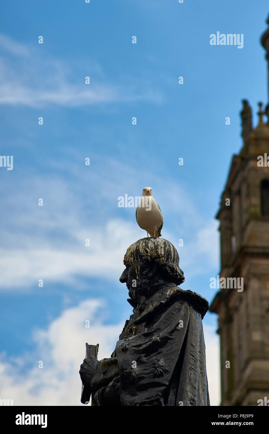 Common gull (Larus canus) commonly called seagull, leaving droppings on the statues spread across George Square, Glasgow UK. - Stock Image