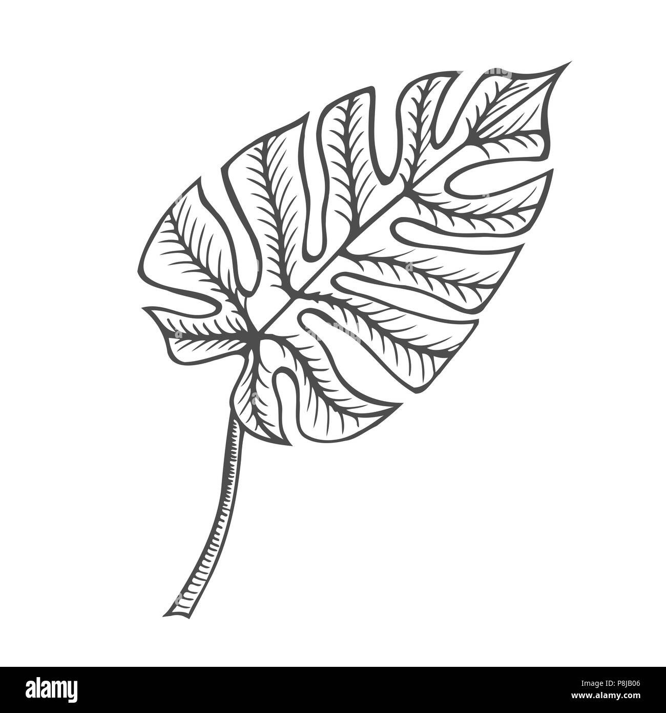 Get Inspired For Leaf Line Art Vector