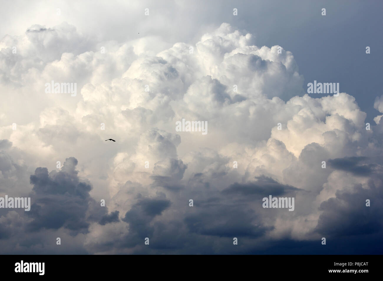 Bird soaring among stormy clouds. Dramatic stormy clouds before rain. Weather background. - Stock Image