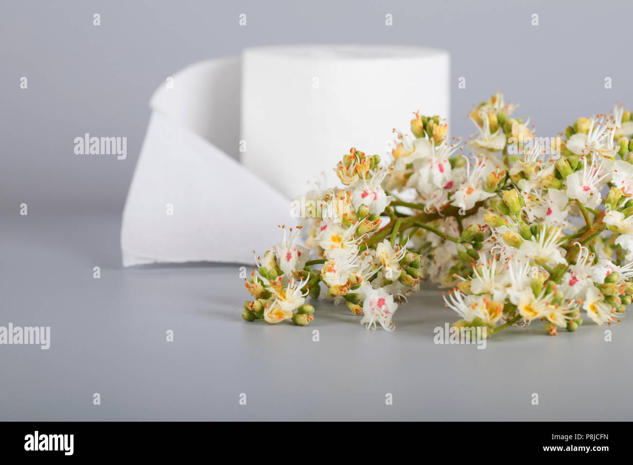 Horse Chestnut Flowers On A Gray Surface Roll Of Toilet Paper In