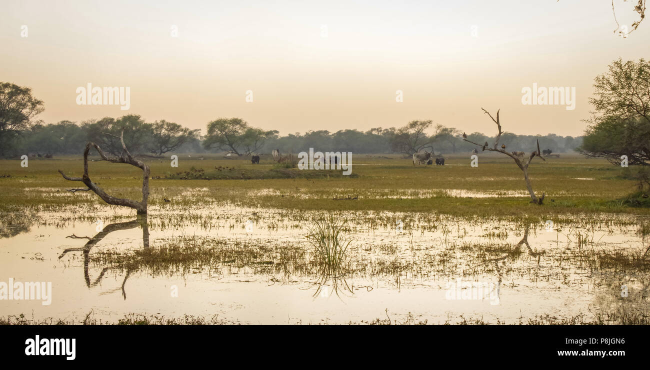 Bharatpur Reserve - Stock Image