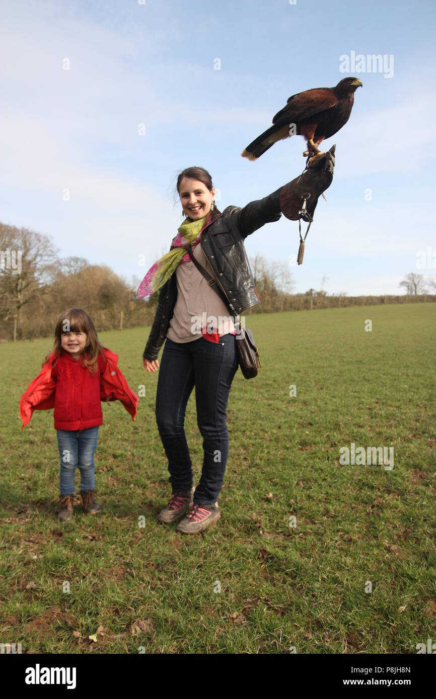 People on a falconry walk with a Harris Hawk - Stock Image
