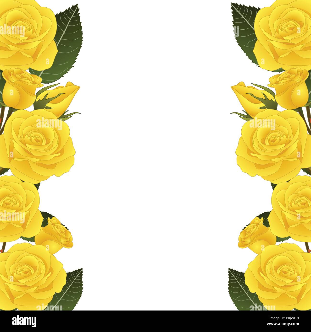 Yellow Rose Flower Frame Border. isolated on White Background ...