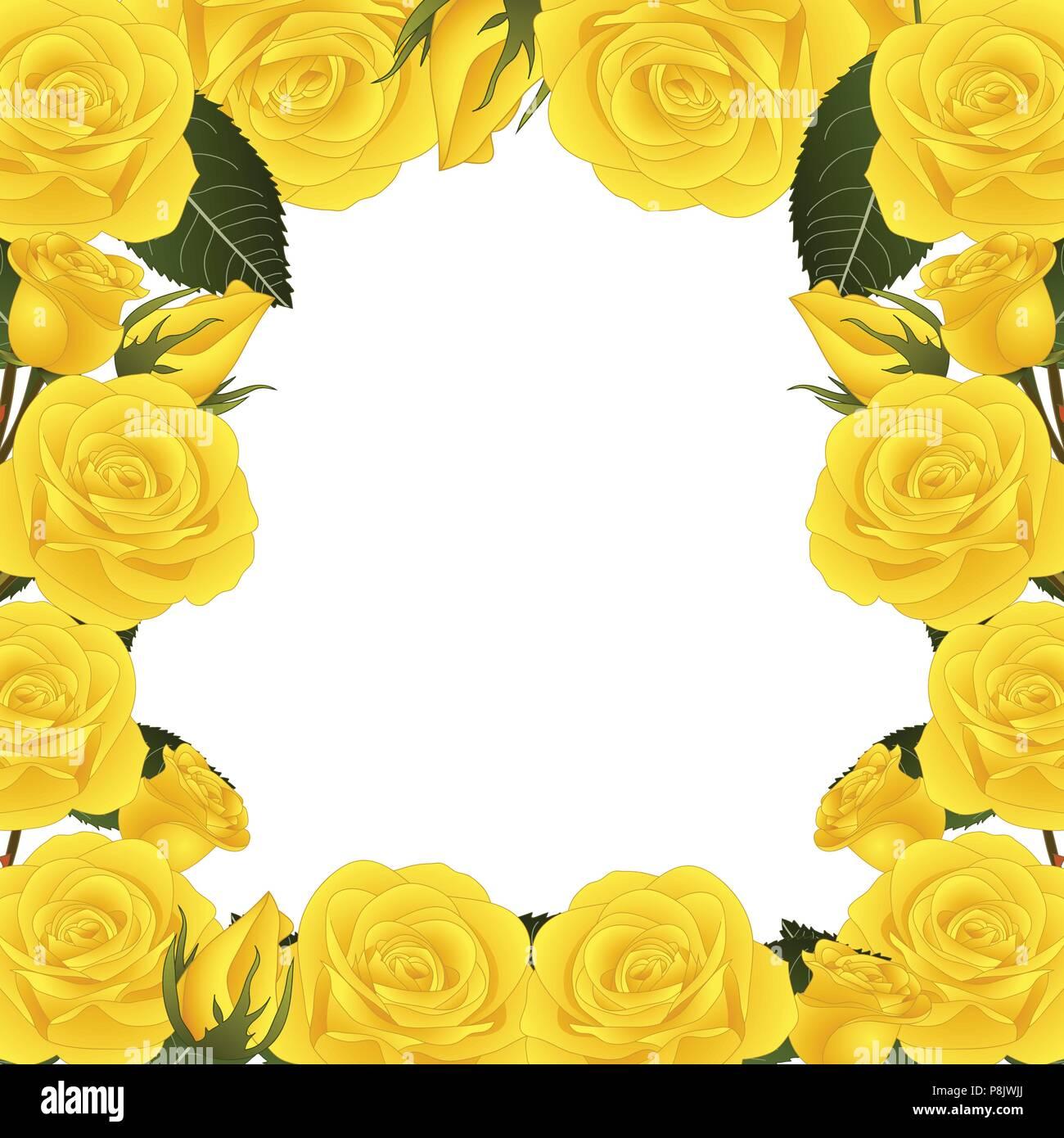 Yellow Rose Flower Frame Border. isolated on White Background ...