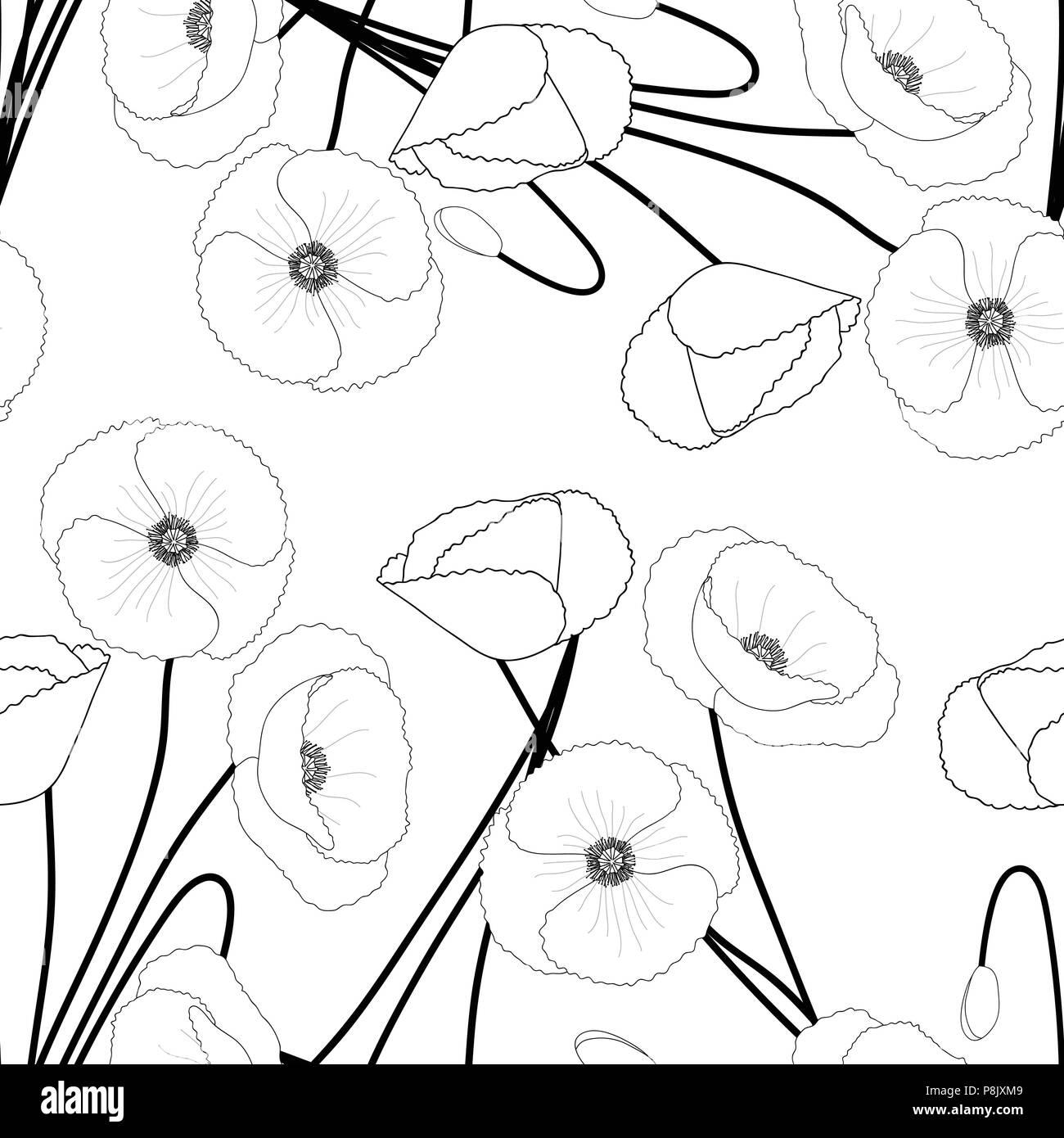 Corn Poppy on White Background. Vector Illustration. - Stock Vector