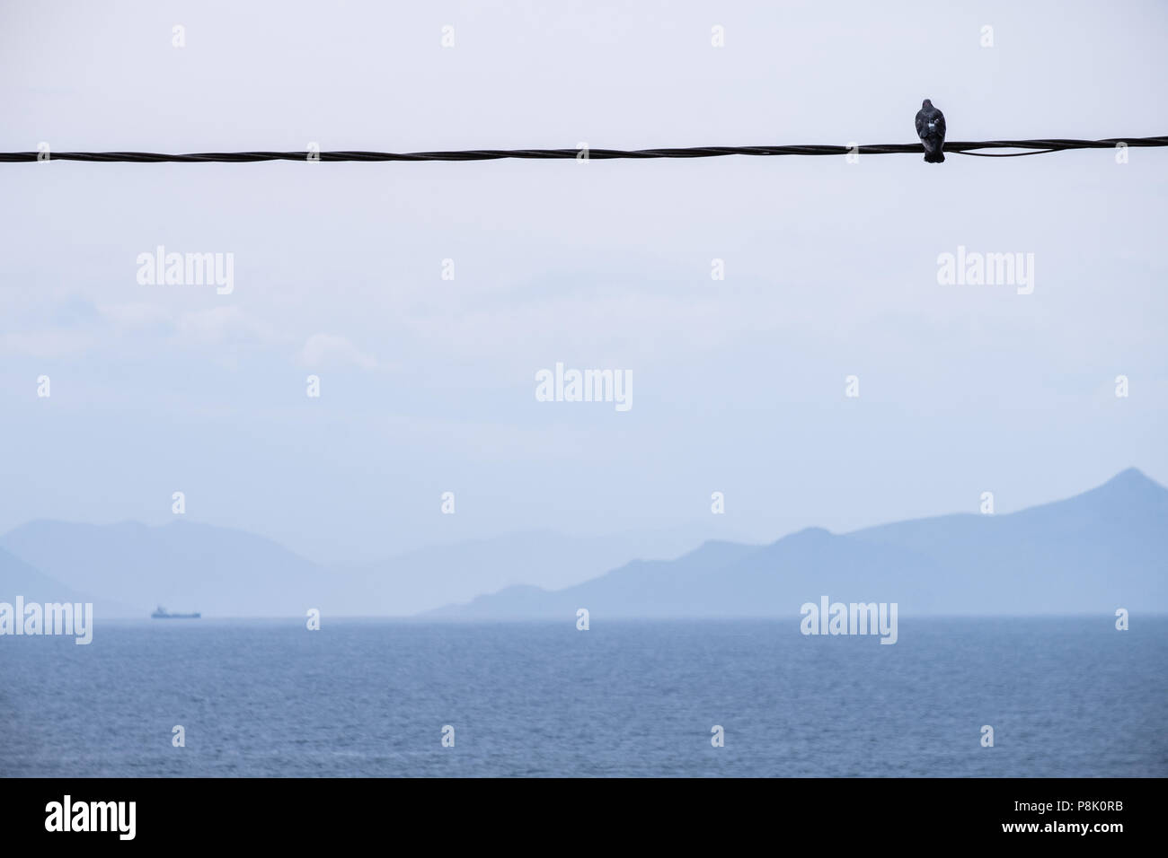 Bird sat on a power line looking at the Aegean sea with the Sardonic Islands in the background with a cargo ship sailing , East Attica, Greece, Europe Stock Photo