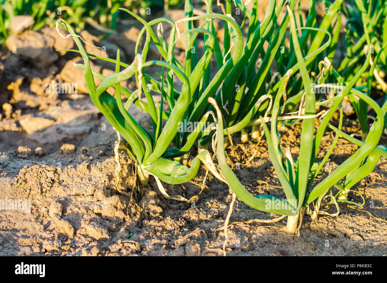 How to grow a good harvest 81