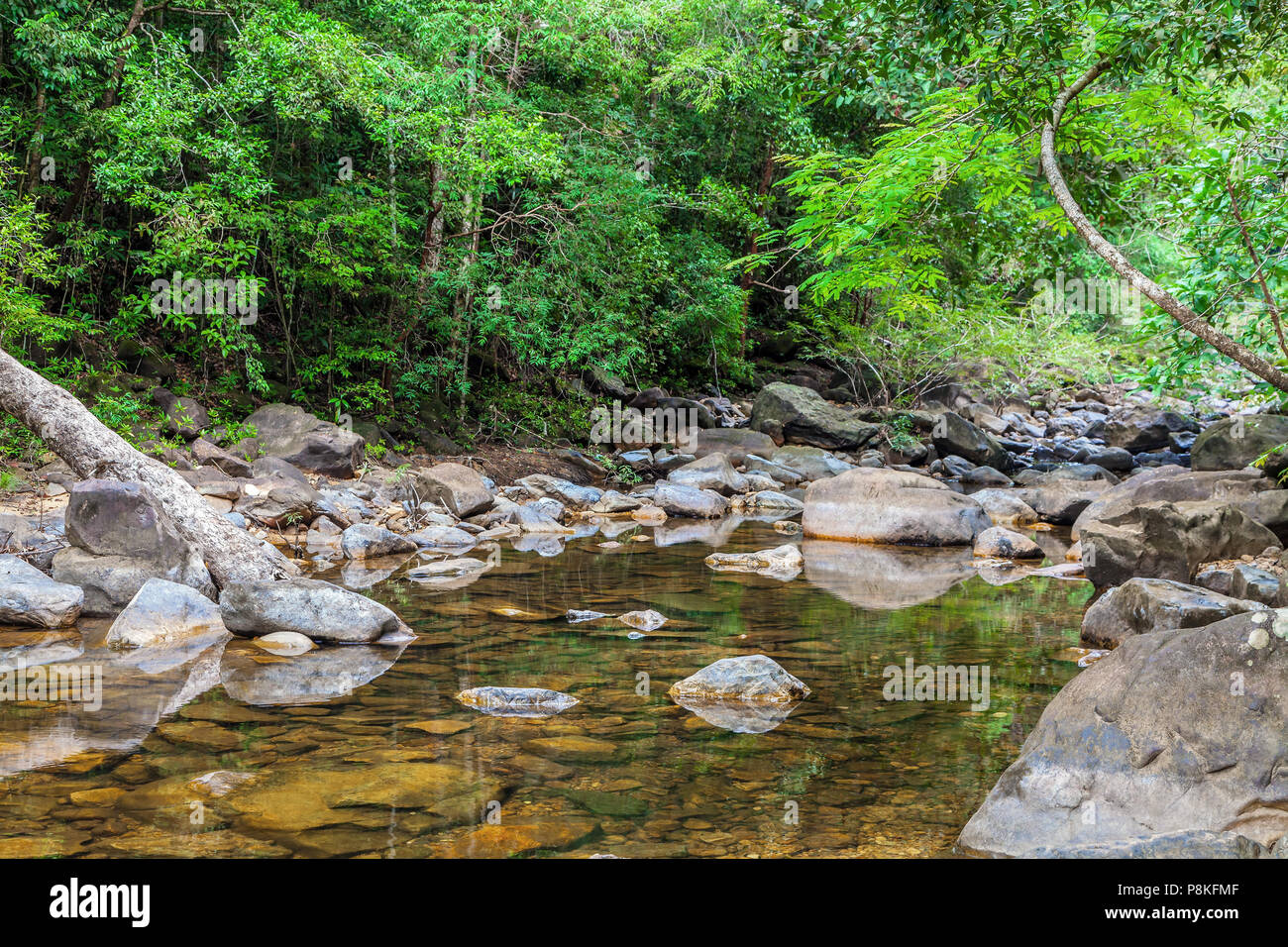 Wild jungle of the island of Koh Chang in Thailand - Stock Image
