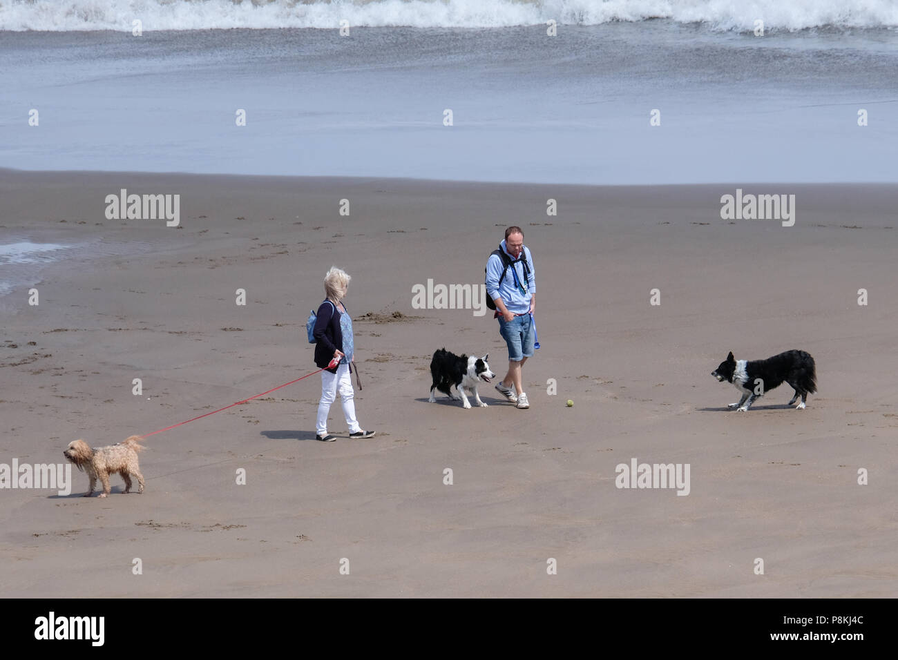 A couple walking their three dogs on the beach at North Bay, Scarborough, Yorkshire - Stock Image