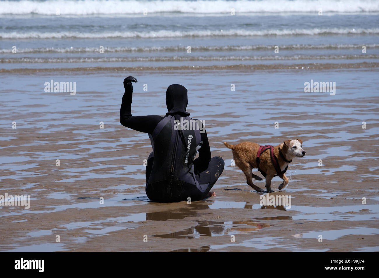 Man with back to camera throwing ball over his back and brown dog chasing after it with face to camera - Stock Image