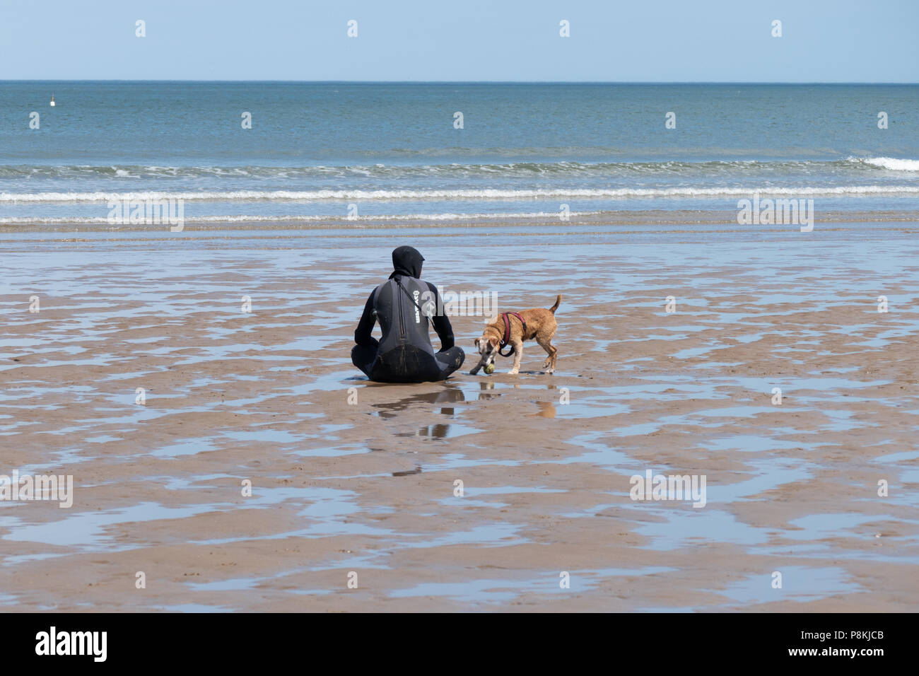 Dog walking and playing on the beaches of North Yorkshire - Stock Image