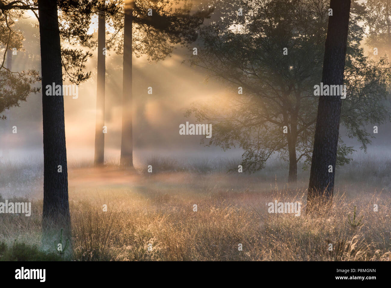 Iridescence in a thin layer of ground fog - Stock Image