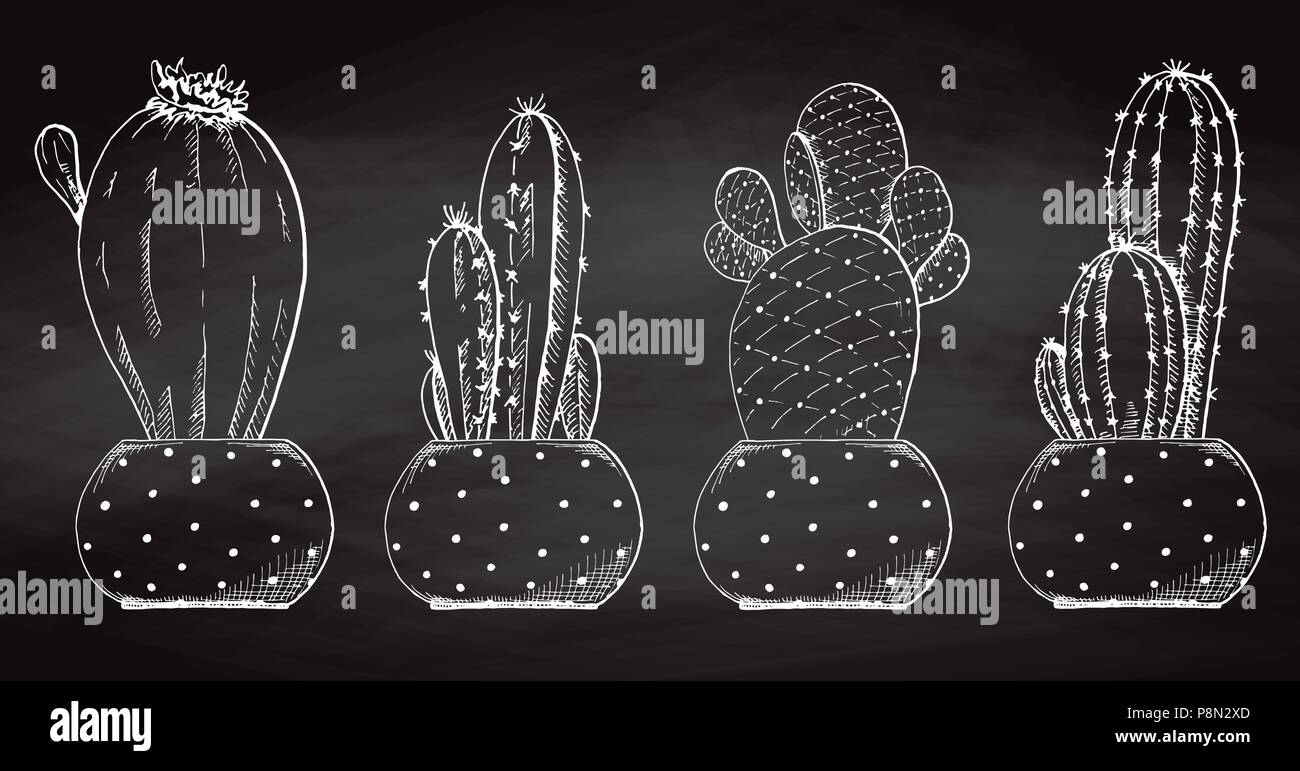 Sketch Succulents In Pots Isolated On The Chalkboard Vector Illustration Stock Vector Image Art Alamy