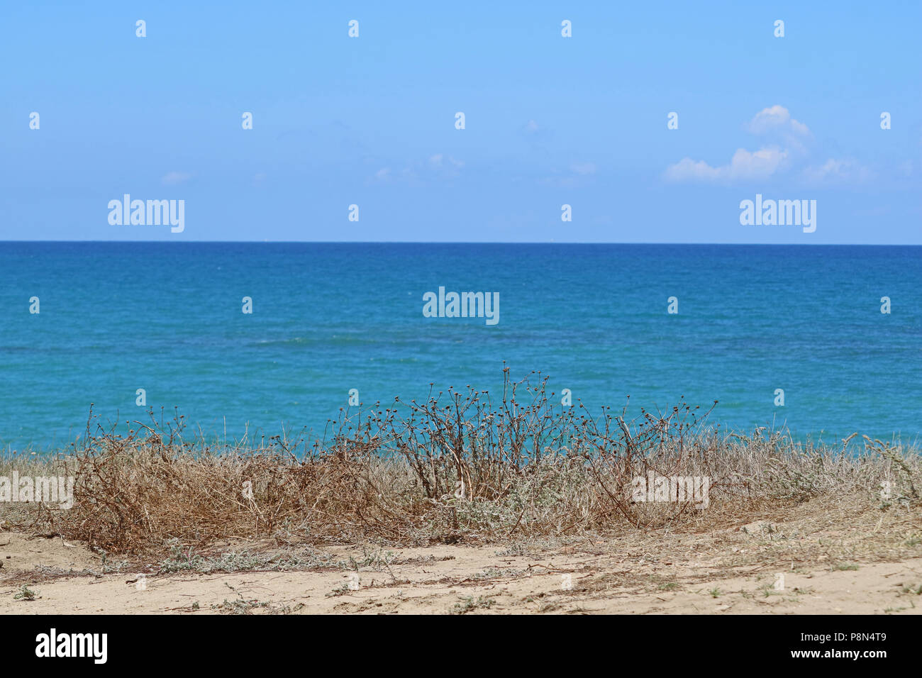 Beautyful Sea Background With Dry Grass On Sandy Ground Blue Sea