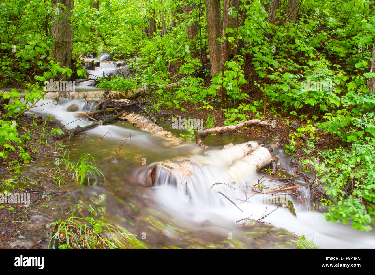 Small stream flowing over logs in forest, moving water in Glacier National Park, Montana, USA - Stock Image