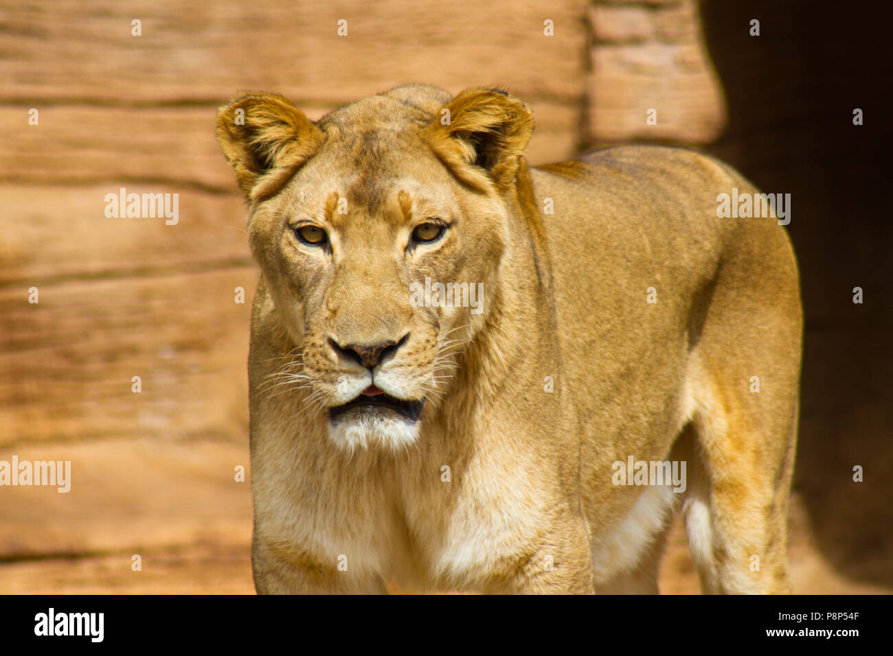 Riverbanks Zoo Stock Photos & Riverbanks Zoo Stock Images - Alamy