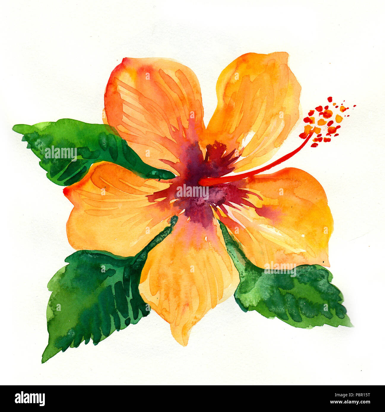 Yellow Hibiscus Flower Watercolor Illustration Stock Photo