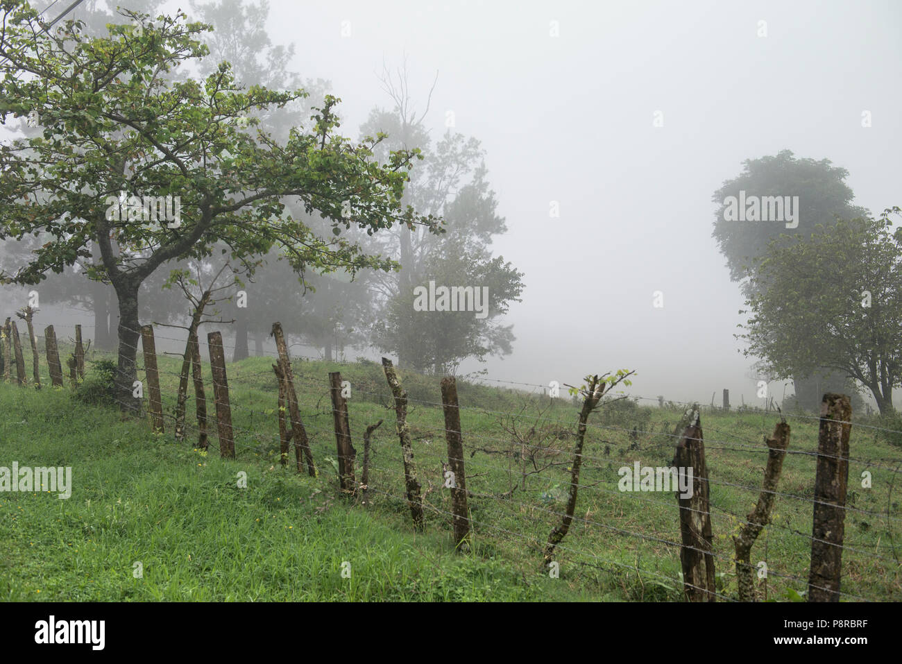 Dreamy foggy landscape in Costa Rica, Central America. A wire fence is held together by barbed wire. Moody view of grass, foggy trees & rustic fence. - Stock Image