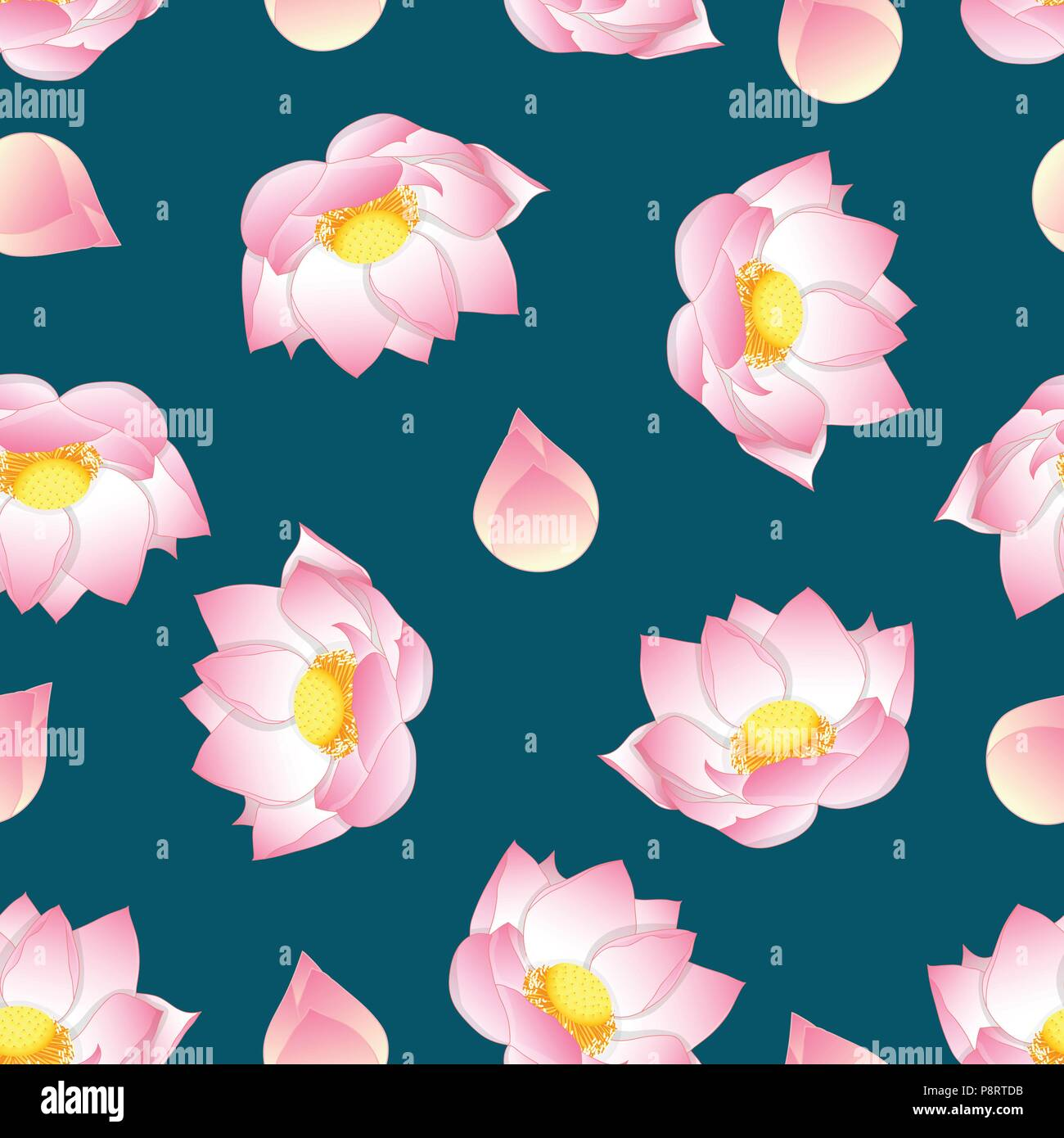 Pink Indian Lotus On Green Teal Background Nelumbo Nuciferasacred