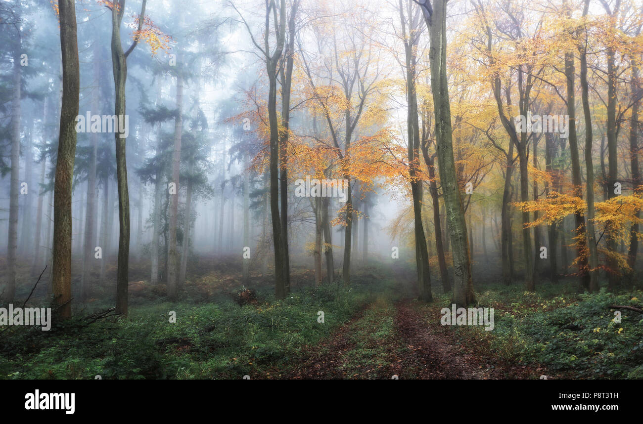 Two Autumn Woodlands - Stock Image