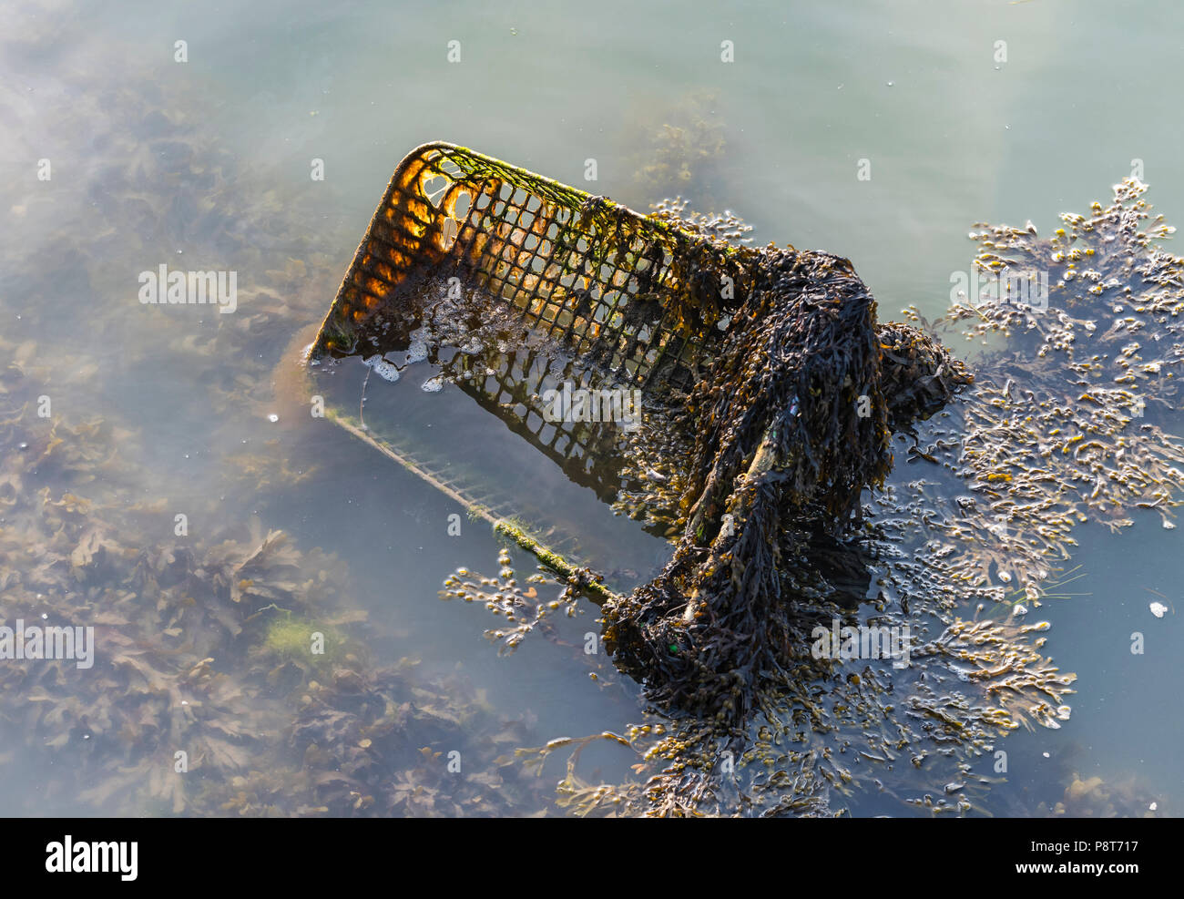 Abandoned shopping trolley in water covered in algae. Abandoned shopping cart discarded and decaying in water. Old junk, Thrown away. - Stock Image