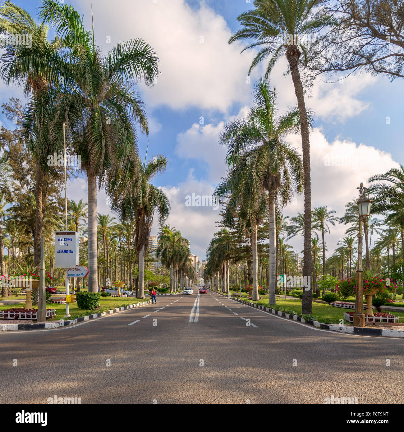 Cairo, Egypt - May 12 2018: Asphalt road framed by trees and palm trees with partly cloudy sky in a morning summer day at Montana public park - Stock Image