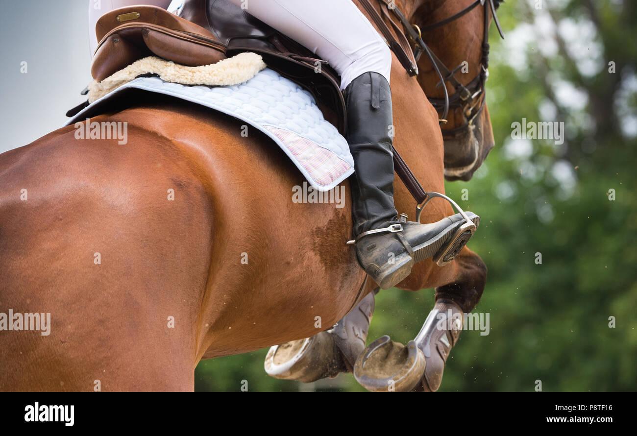 Horse Riding, Dressage themed photo - Stock Image