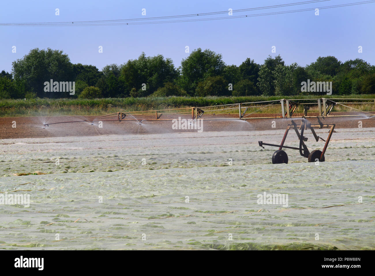 centre pivot boom crop irrigation system in use during drought in field with plastic mulches to retain moisture and suppress weeds york united kingdom - Stock Image
