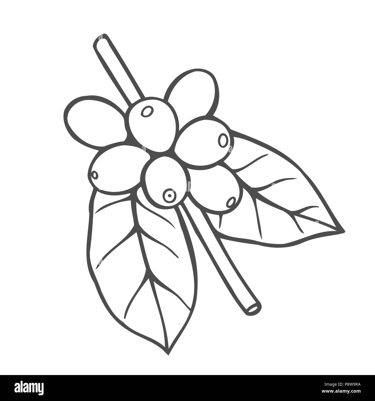 Hand Drawn Vector Line Icon Of Coffee Tree Plant Linear Logo