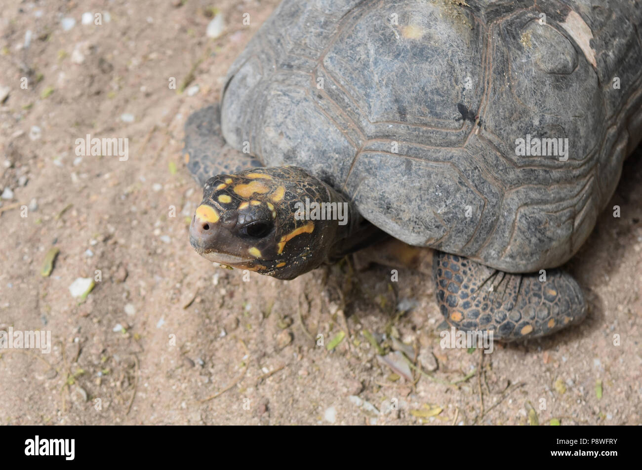 cute turtle stock photos cute turtle stock images alamy