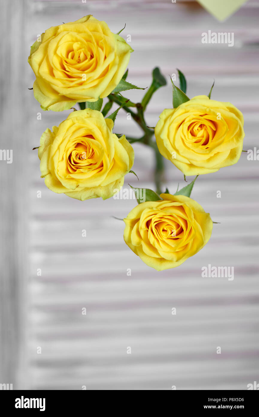 Yellow flowers, roses on a light background.Floristic. Stock Photo