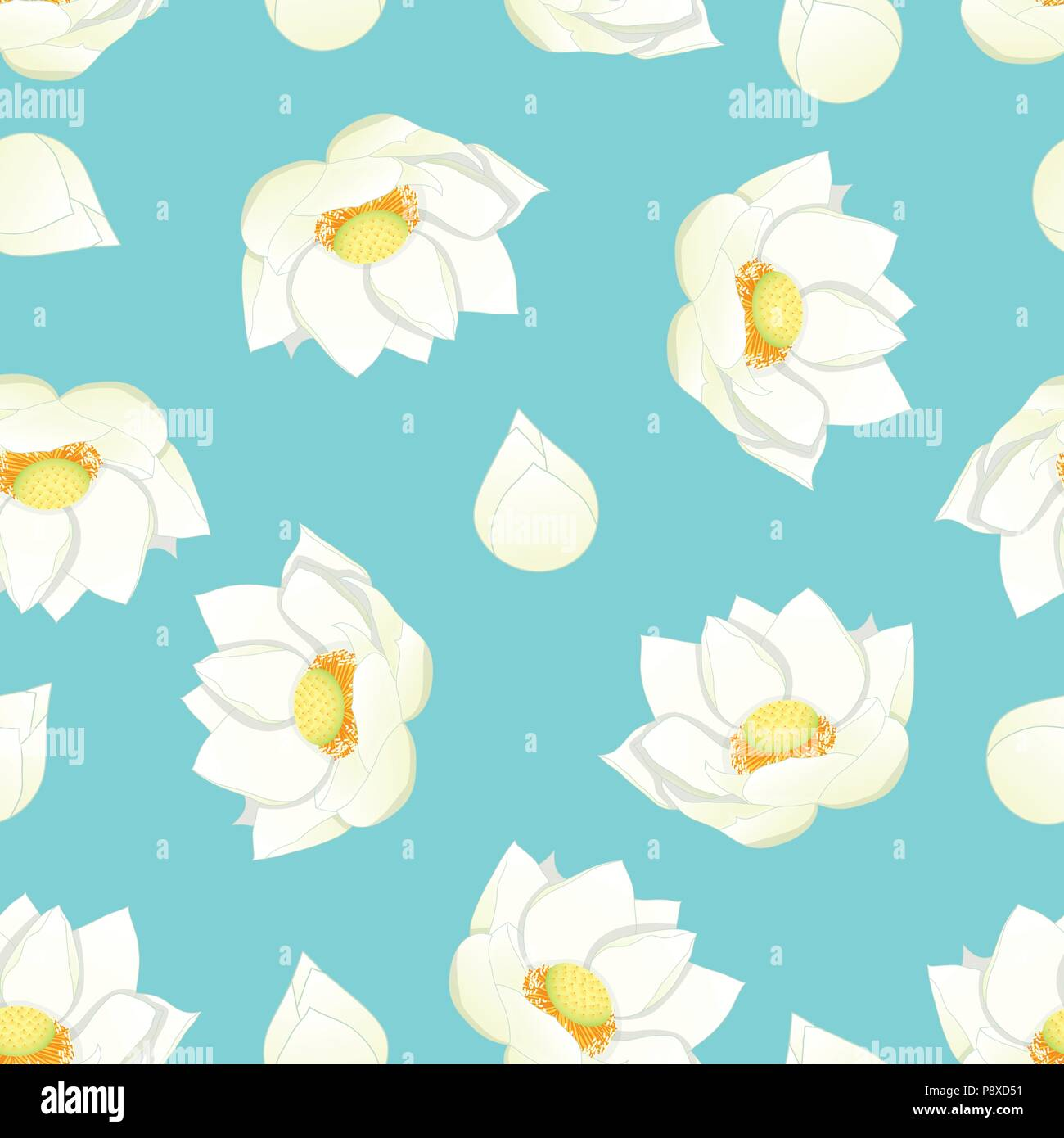 White Indian Lotus On Blue Background Nelumbo Nuciferasacred