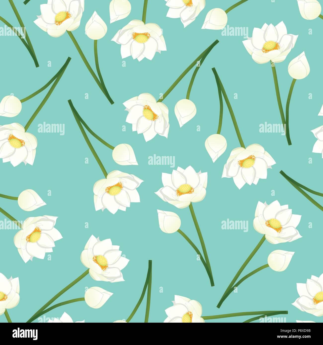 White Indian Lotus On Green Mint Background Nelumbo Nucifera