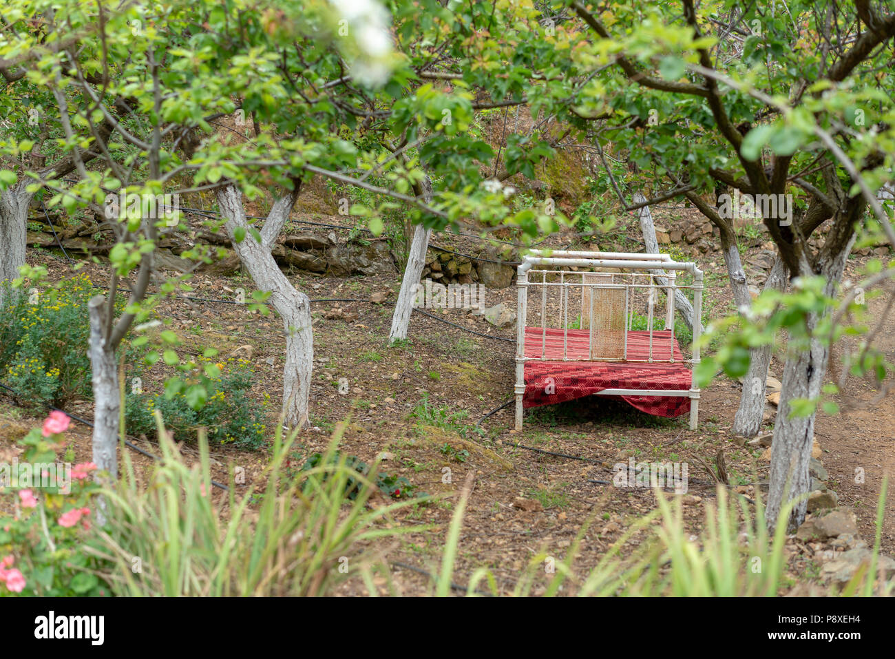 A vintage iron bedstead or bed outside in an orchard at the Botanical garden of Crete, Chania - Stock Image