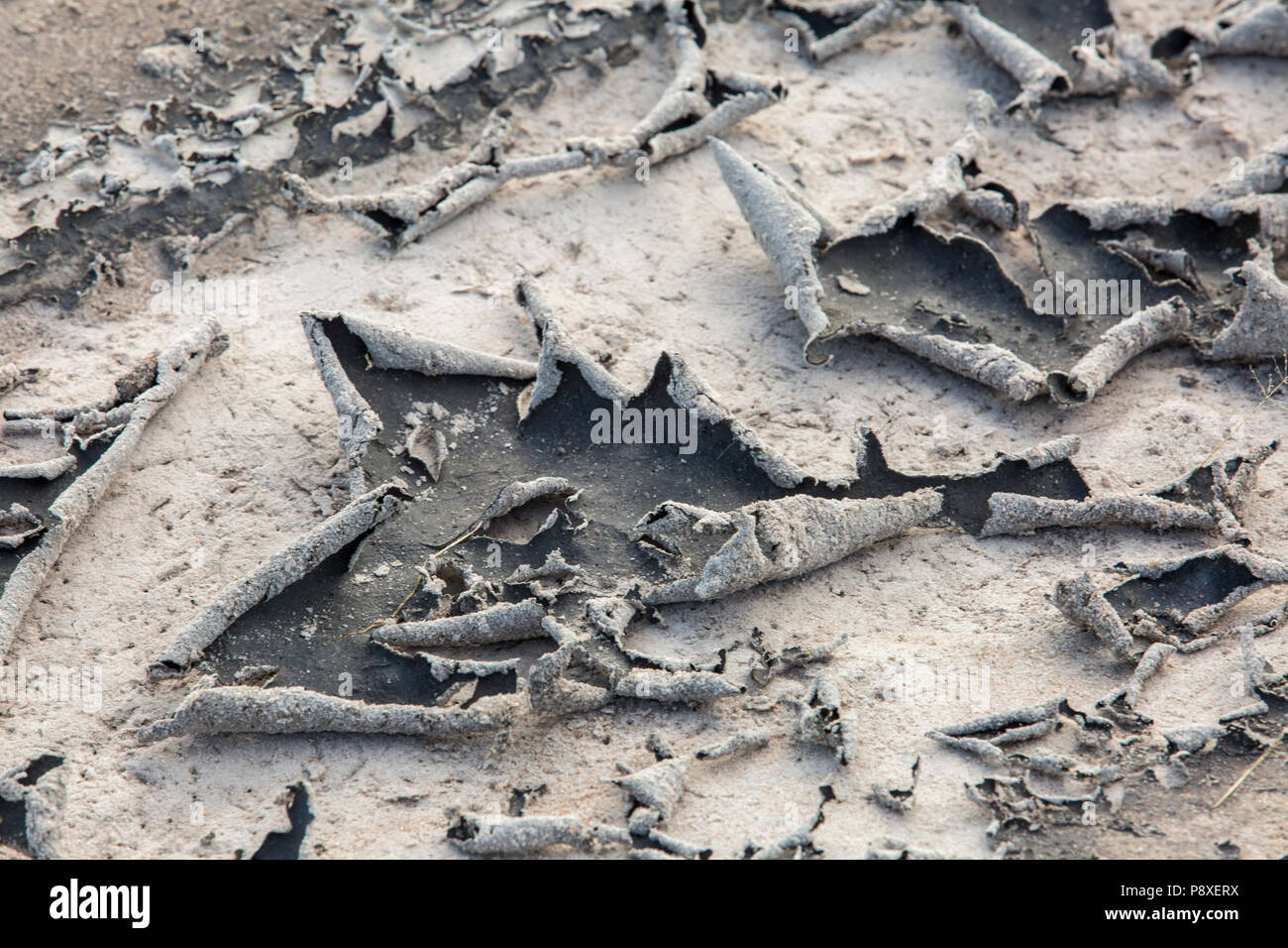Capping on a clay soil with a dried clay crust curling Stock Photo