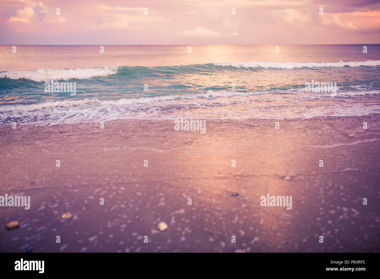 Rosy Pink Purple And Gold Sunset Twilight On The Beach With A