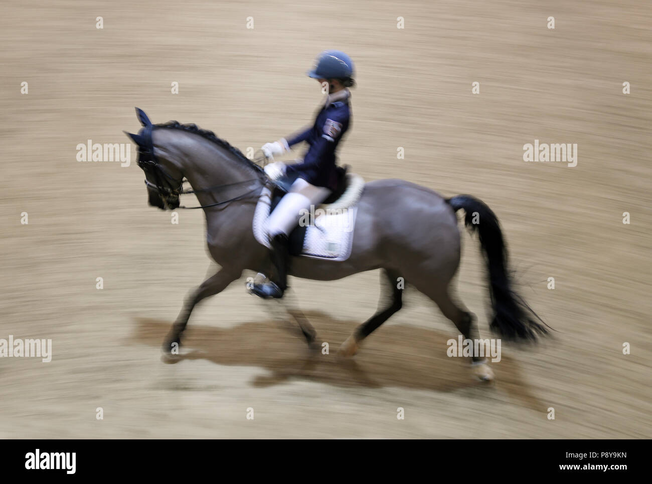 Berlin, dynamics, dressage rider and horse trotting - Stock Image