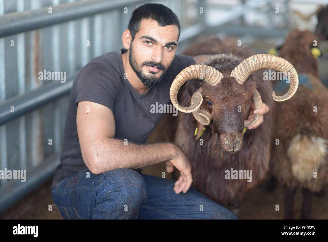 Muslim man slaughtering sheep, for the Eid-al Adha sacrifiyng feast, Feast of sacrifice - Stock Image