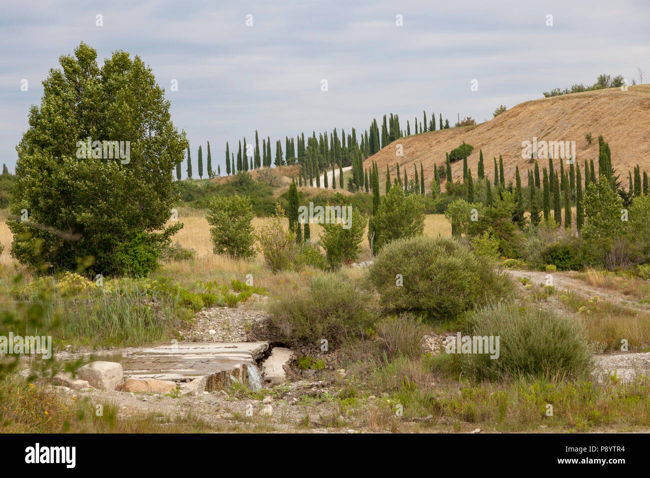 A typical scenery of cypresses in the vicinity of Montepulciano with the quite dried-up bed of a river (Tuscany - Italy). Paysage caractéristique de c - Stock Image