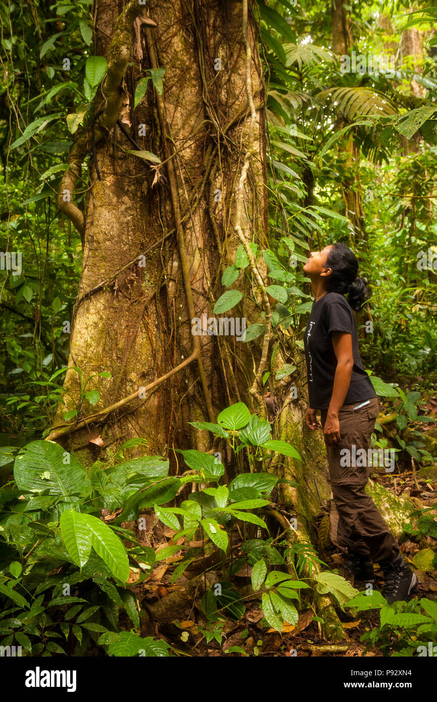 Outdoor photographer Zizza Gordon and big tree in the rainforest of Portobelo national park, along the overgrown Camino Real trail, Republic of Panama - Stock Image