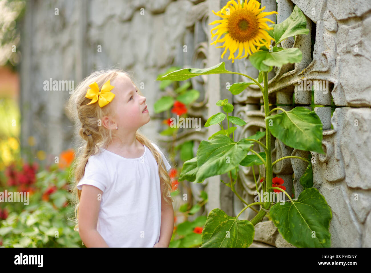 Cute little girl reaching to a sunflower in summer field. Exploring nature with kids. - Stock Image