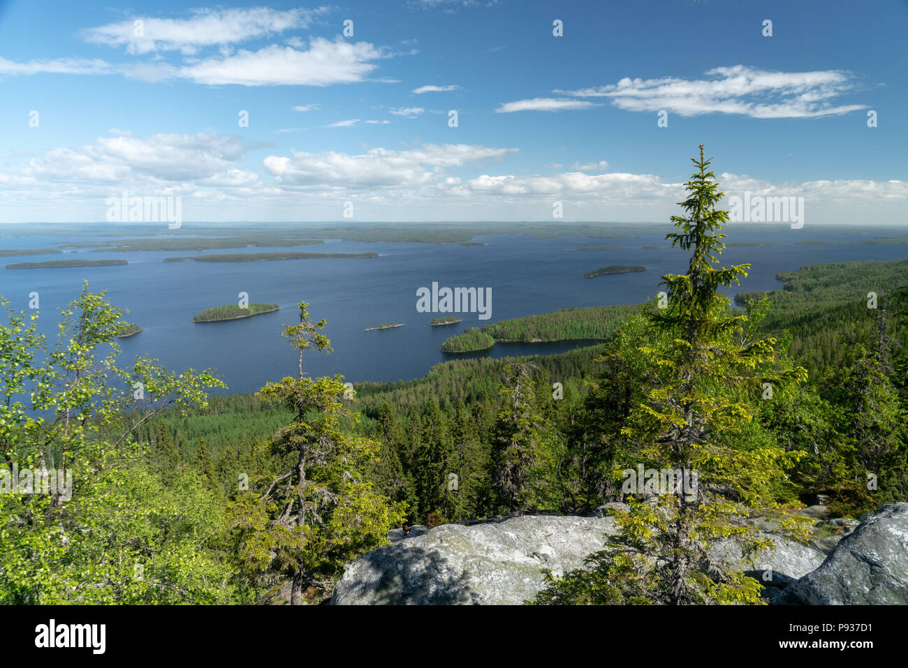 Landscape view over lake Pielinen in Koli National Park in Finland at sunny summer day - Stock Image