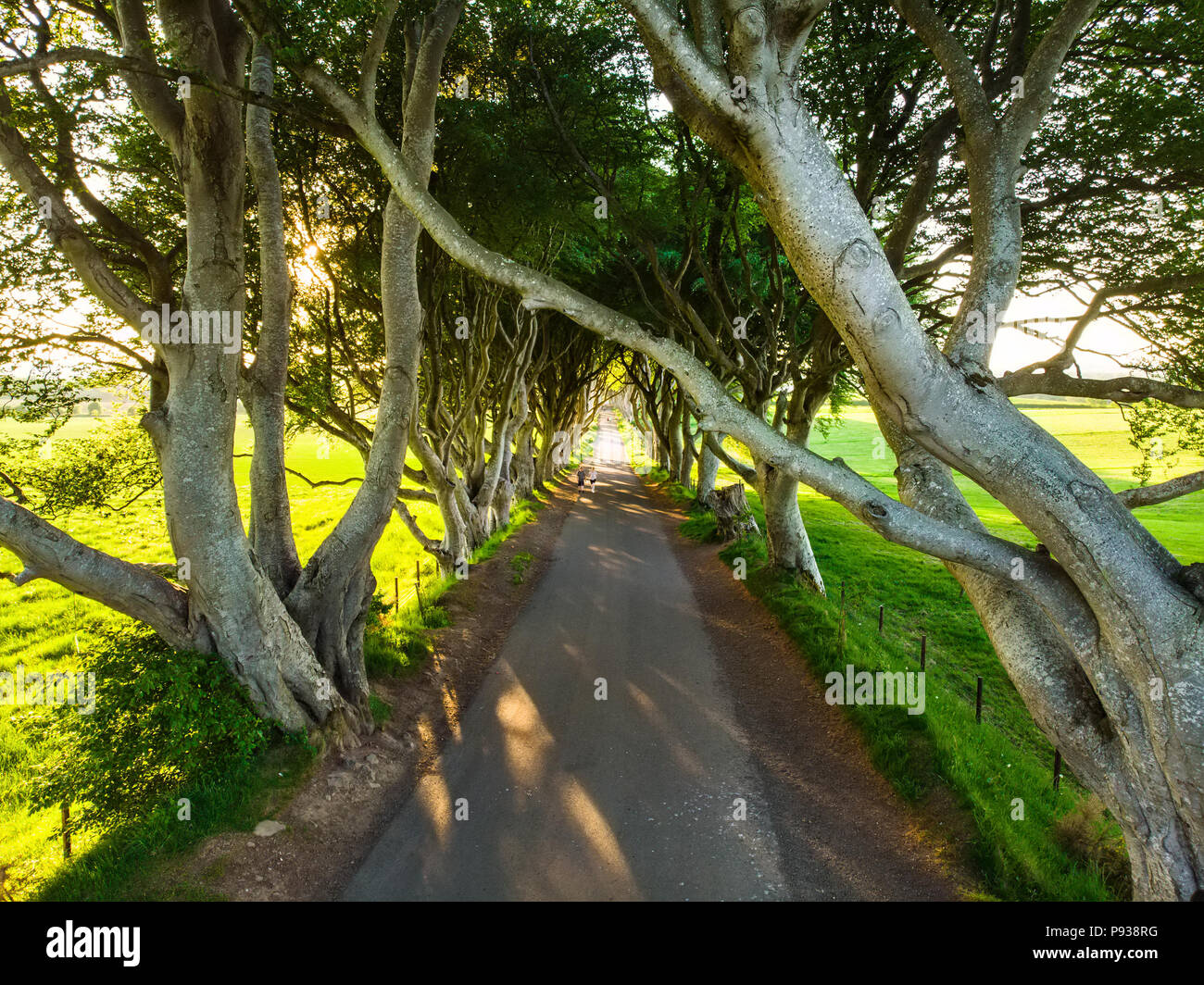 The Dark Hedges, an avenue of beech trees along Bregagh Road in County Antrim. Atmospheric tree tunnel has been used as filming location in popular tv - Stock Image