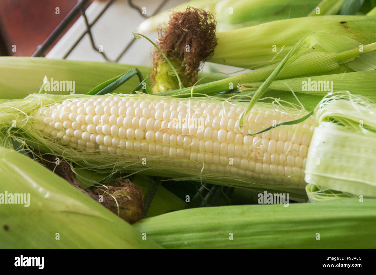 Ears of corn are ready for sale at the Farmers Market in New Bern North Carolina - Stock Image